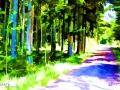 mystic-forest - visartis®